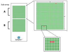 EpiTitan Histone Peptide Microarray Workflow