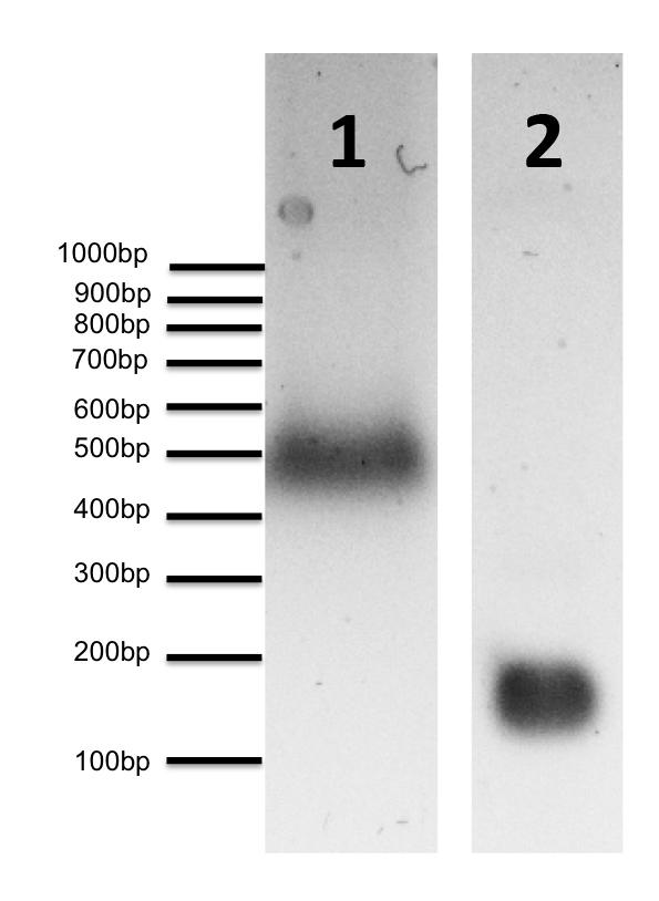 16-0011 DNA Gel