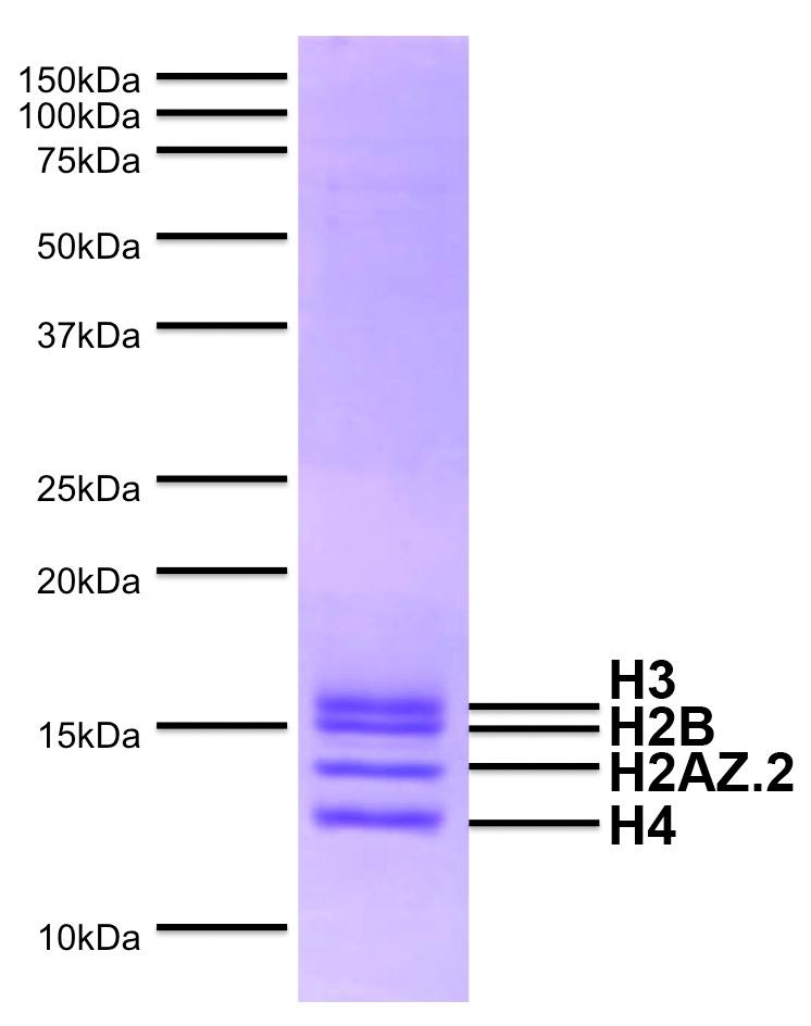 16-0015 Protein Gel