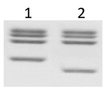 16-0018 Detailed Protein Gel Data
