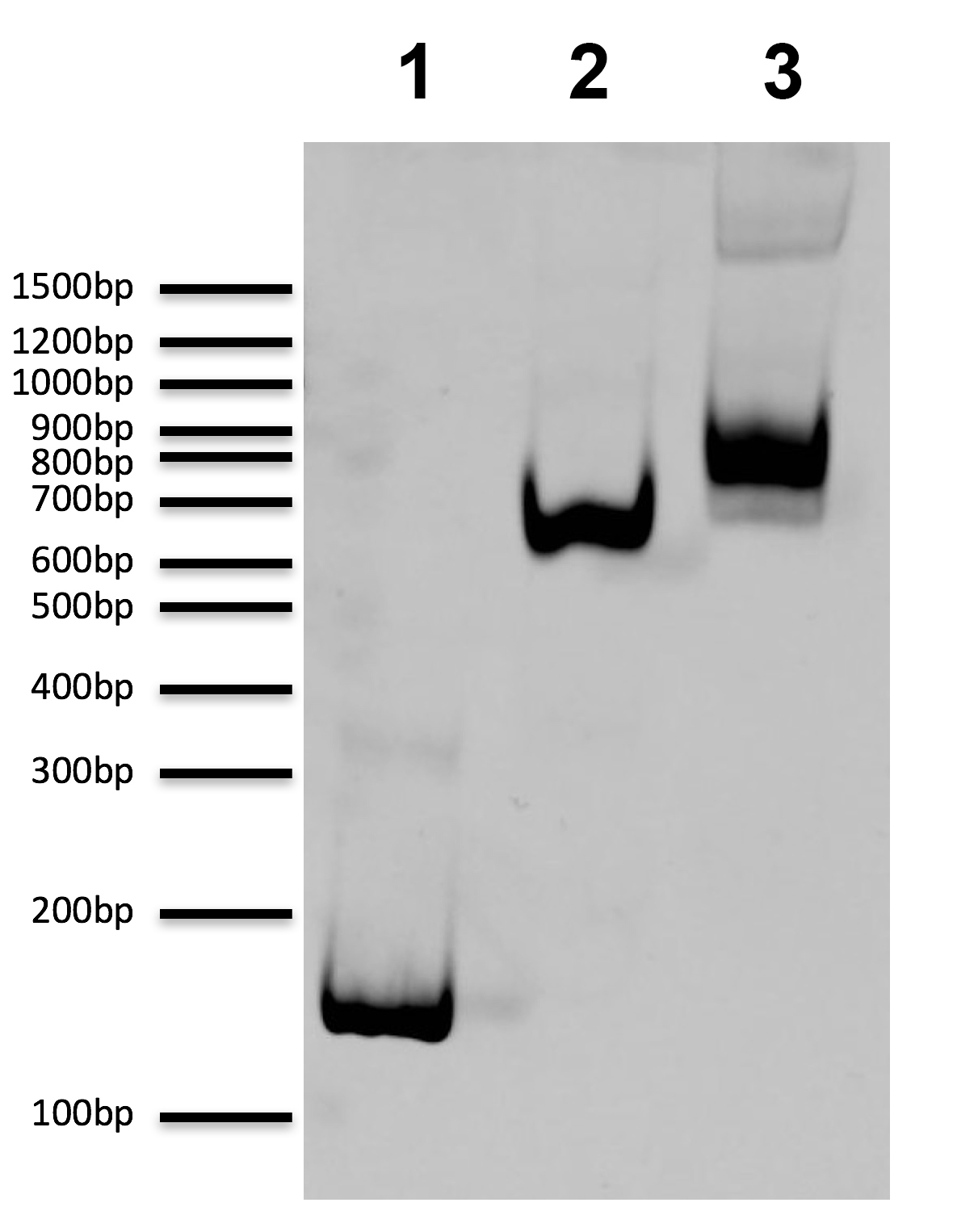 16-0020 DNA Gel Data