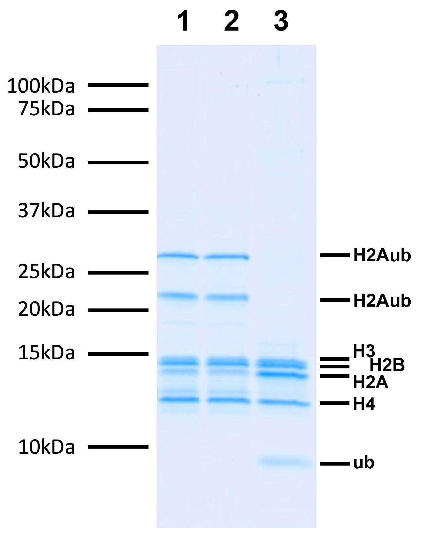 16-0020 Deubiquitination assay Data