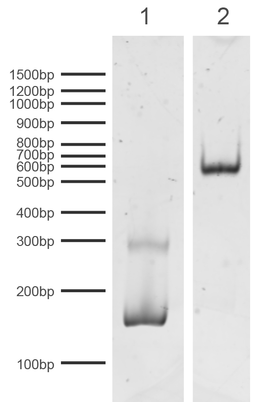16-0342 DNA Gel Data