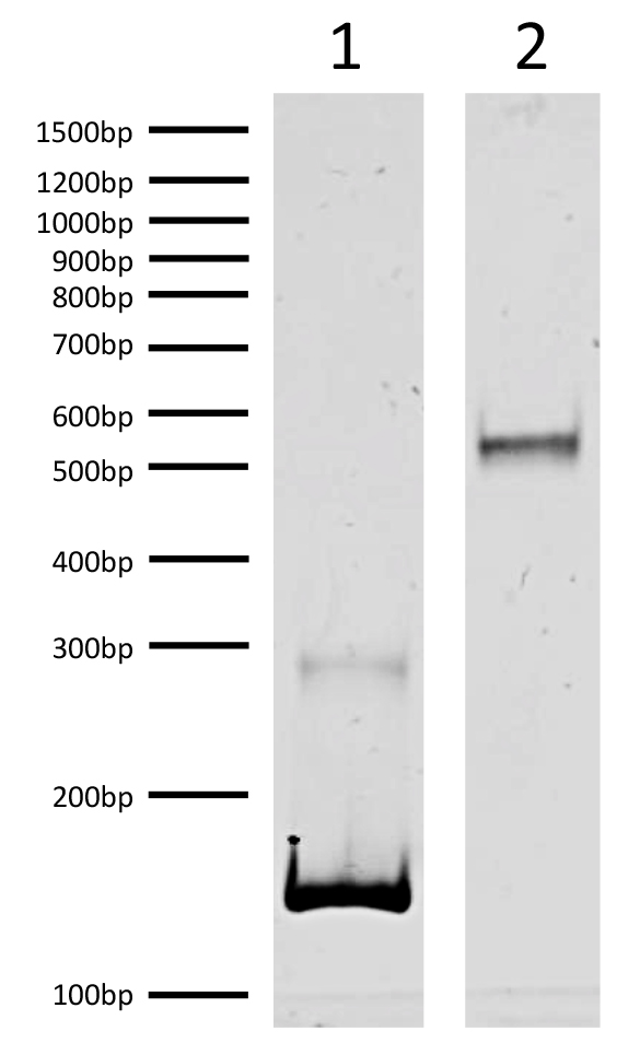 16-0349 DNA Gel Data