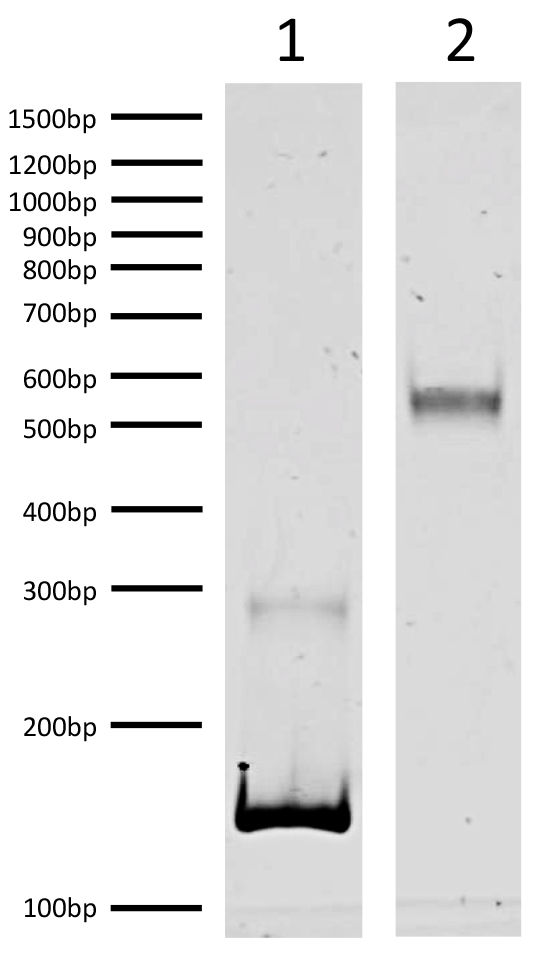 16-0350 DNA Gel Data