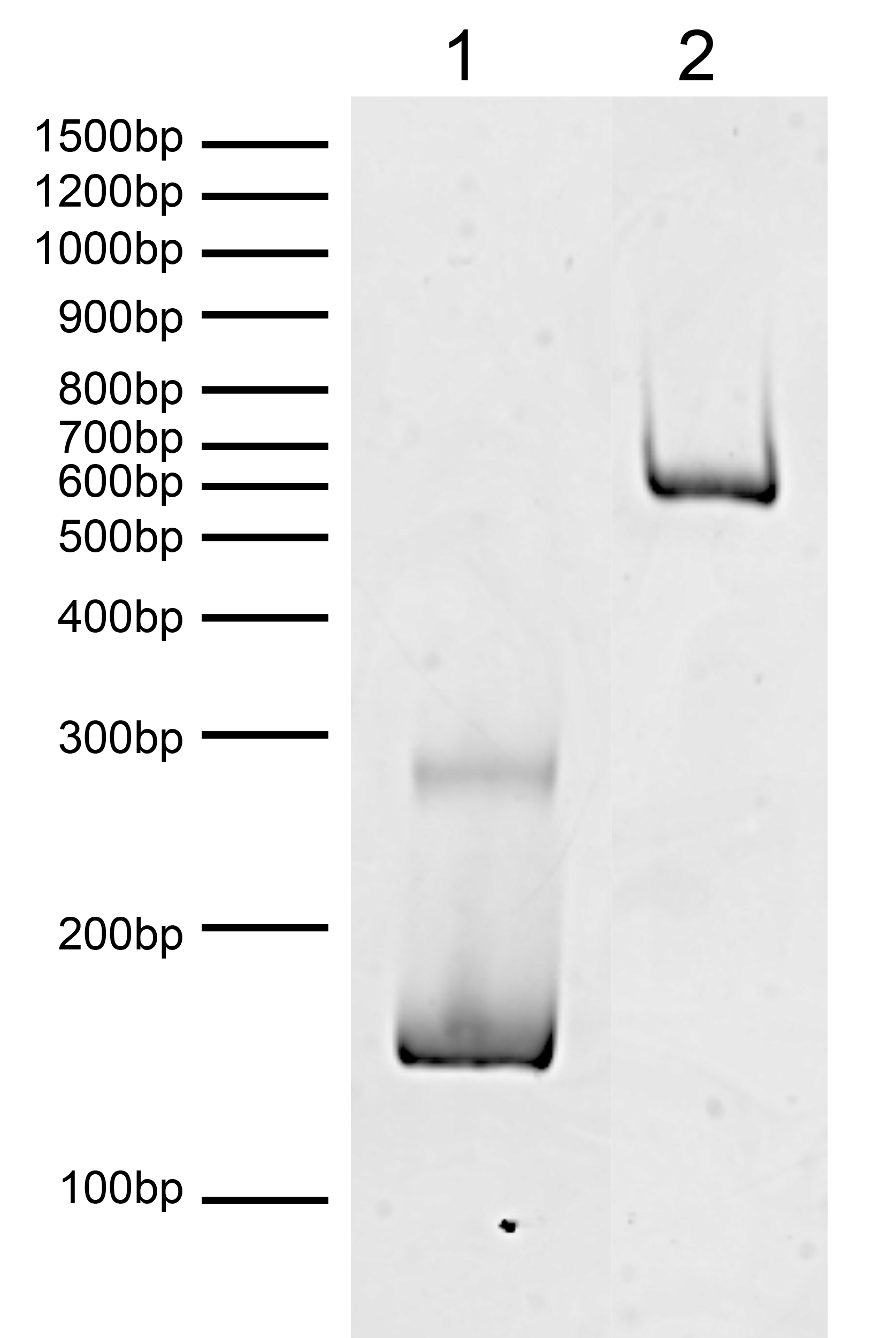 16-0373 DNA Gel Data