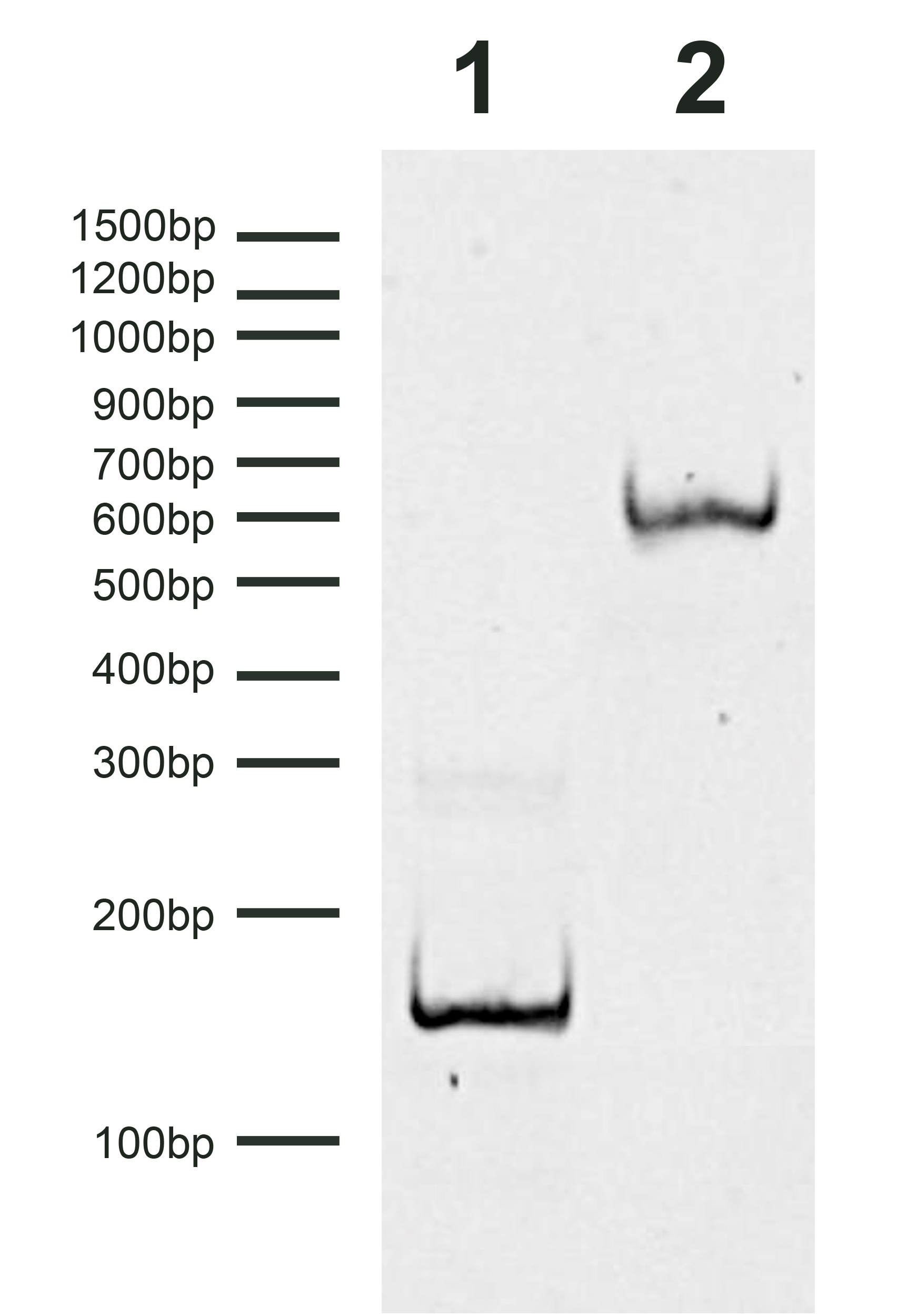 16-0378 DNA Gel Data