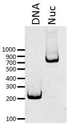 16-4101 DNA Gel