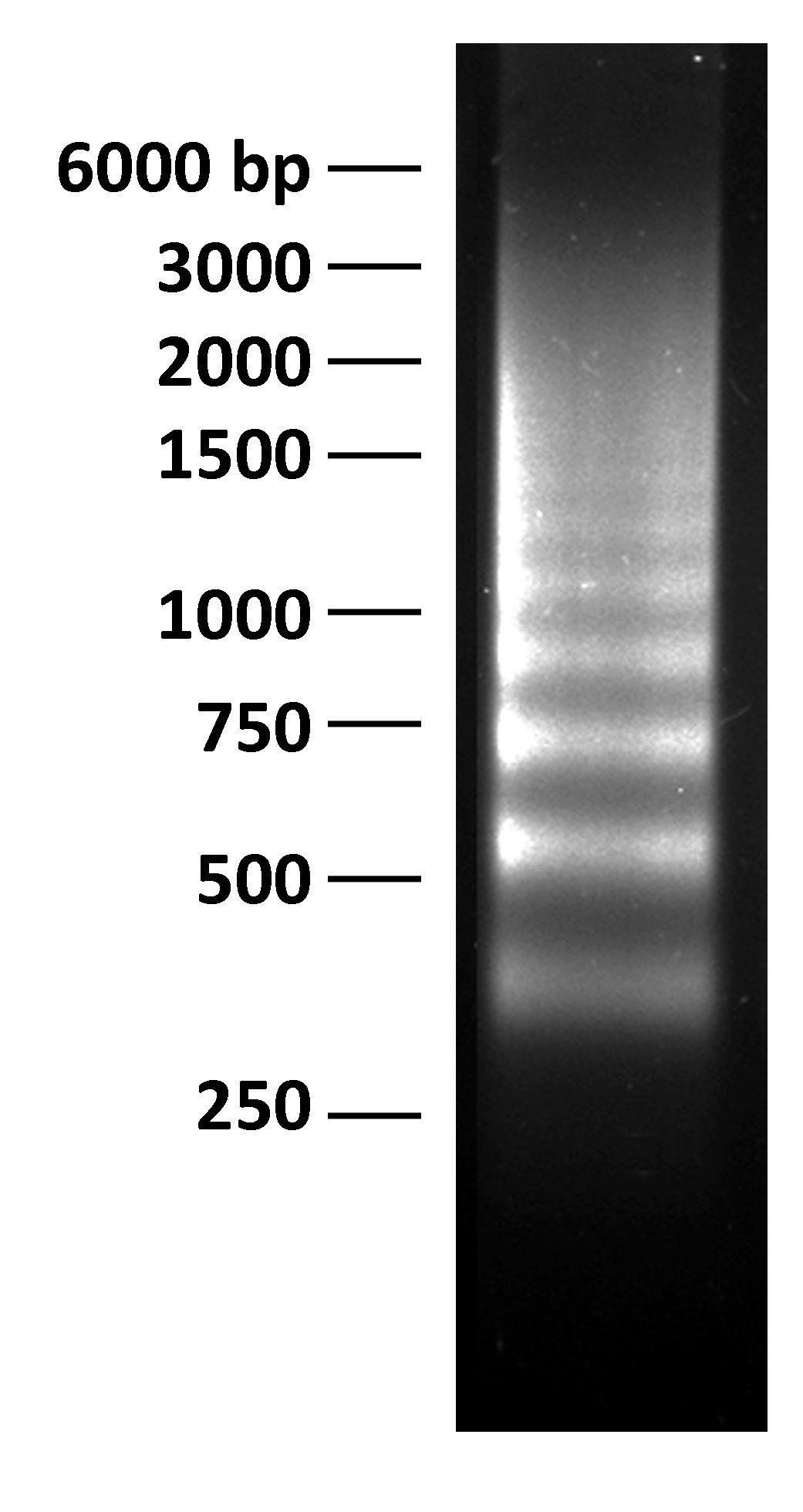 16-0003 DNA Gel