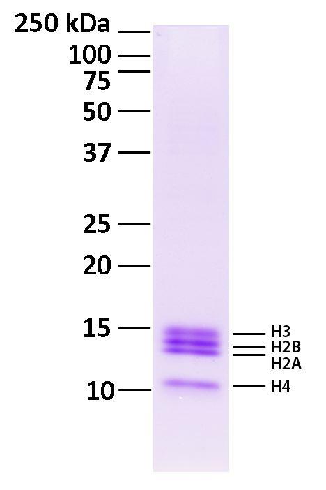 16-0003 Protein Gel