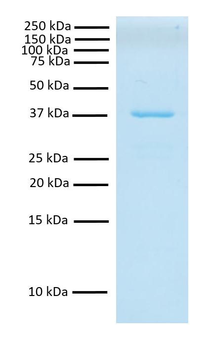 15-0067 Gel and Purity QC Data