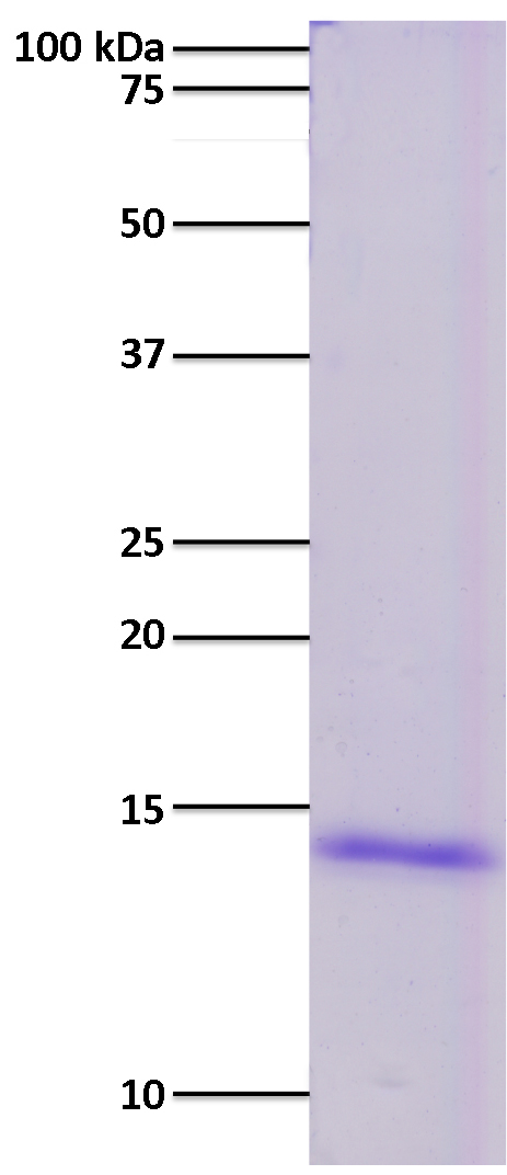 15-0302 Gel and Purity QC Data